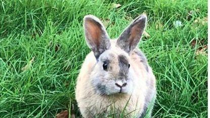 """""""Een foto van een konijn in den hof, daar is echt wel goed over nagedacht"""""""
