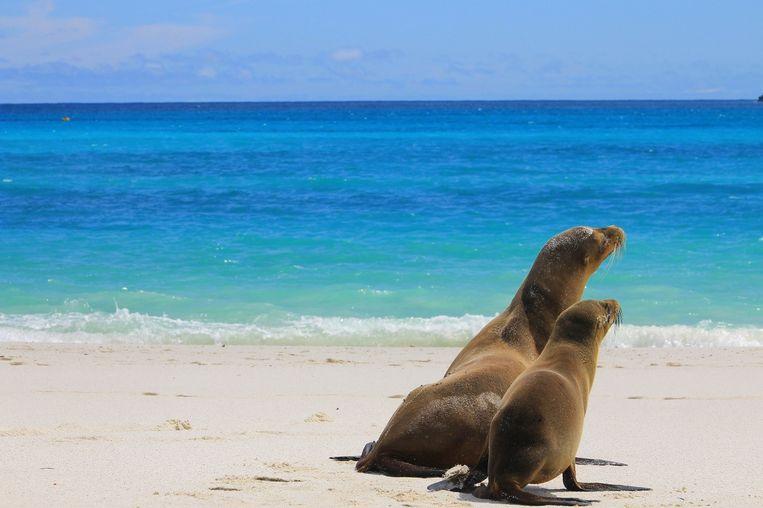 Zeehonden op de Galapagos.