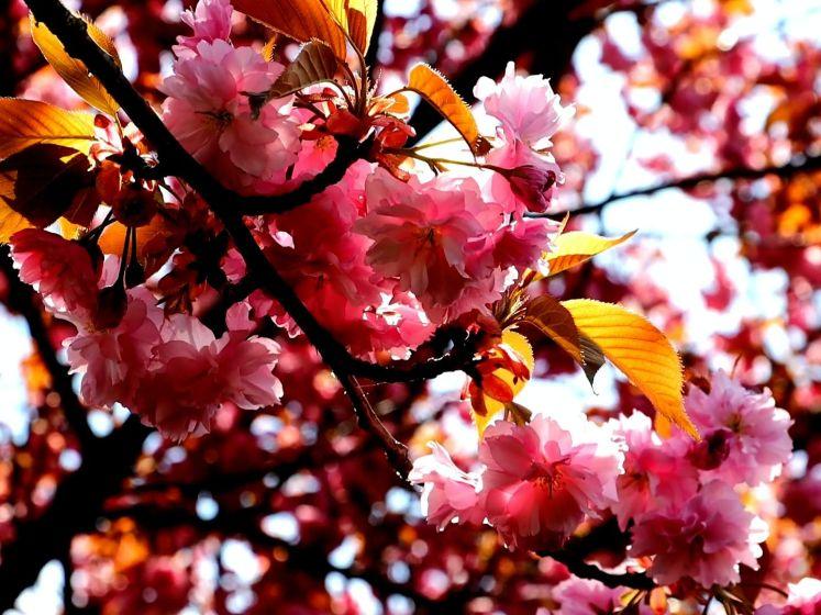 'Mooiste straat van Enschede' weer volop in bloei