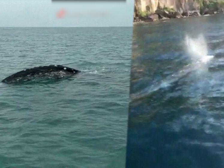 Uitzonderlijk bezoek van grijze walvis in Napels