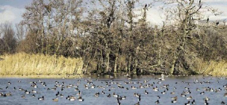 Dankzij de grote verscheidenheid aan landschappen binnen het plassengebied is de diversiteit aan broedvogels er groot. (JANKO VAN BEEK) Beeld