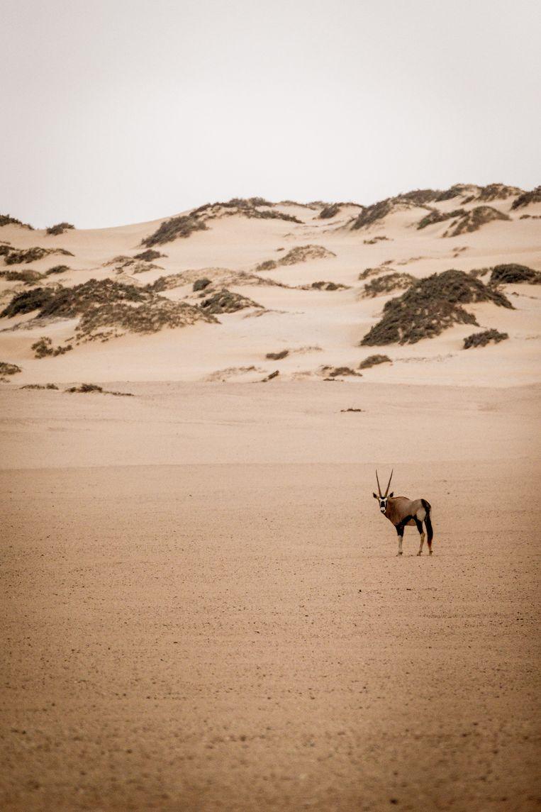 Skeleton coast in Namibië Beeld Hans Avontuur