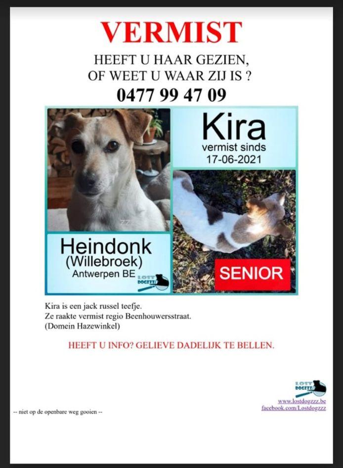 Jack russell Kira verdween dochterdagochtend in domein Hazewinkel in Heindonk.