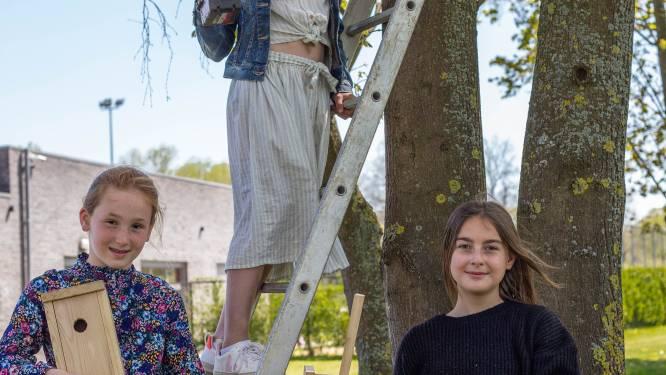 Leerlingen hangen zelfgemaakte nestkastjes op om processierups te bestrijden