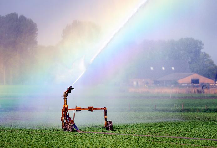Veel boeren moesten deze droge zomer veel meer sproeien.