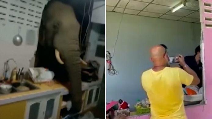 videostill Olifant breekt door keukenmuur op zoek naar eten