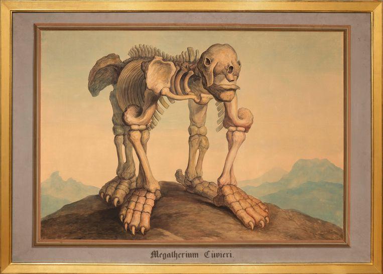 De Megatherium cuvieri. 'Hij lijkt je frontaal aan te kijken.'   Beeld