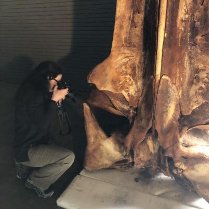 Dr. Patricia Rosel neemt foto's van het skelet van de Rice's walvis.