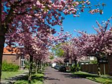Enschedese straat volop in bloei: 'Dit is magisch'