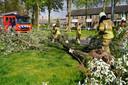 In Oosterhout viel een boom rond 14.45 uur om door het stormachtige weer.