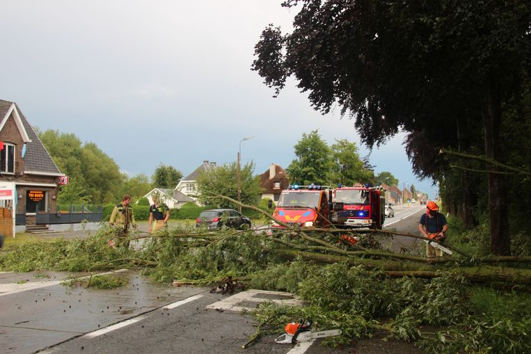 Aan de treinhalte Vijfhuizen belandde een boom op de Gentsesteenweg.