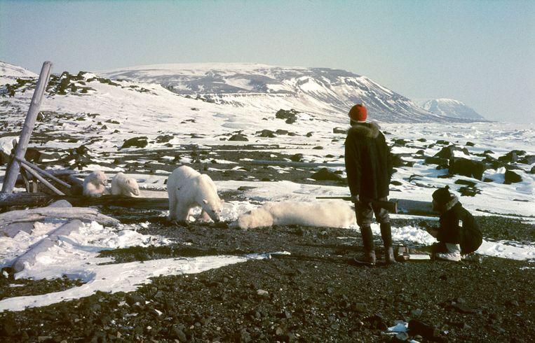 Ko de Korte en Piet Oosterveld bij een verdoofde beer op 30 april 1969.                                       Beeld Arne Randers