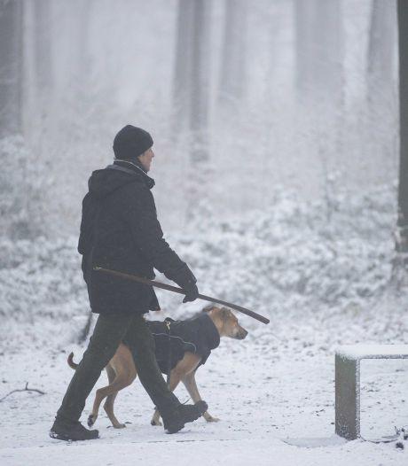 Wanneer is het te koud om met de hond te wandelen?