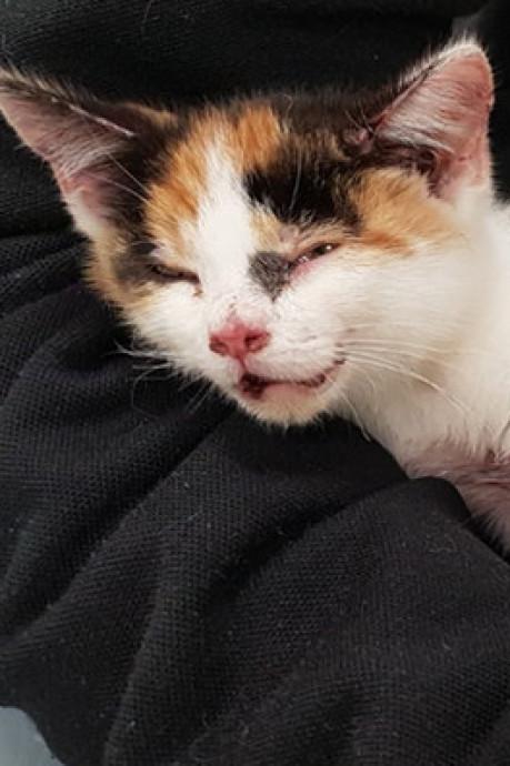 Dierenbescherming: Kitty bewijst dat dierenwethouder nodig is