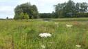 Het Dynamisch Beekdal is een drassig gebied waar vogels van profiteren.