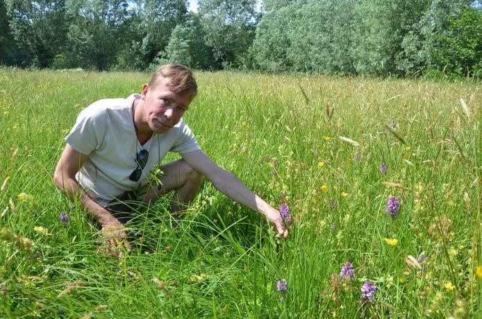 Christophe Hillaert toont enkele van de wilde orchideeën in een grasland in de Buylaers.