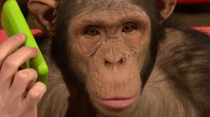 Chimpansees kunnen hun ogen niet geloven bij deze goocheltrucs