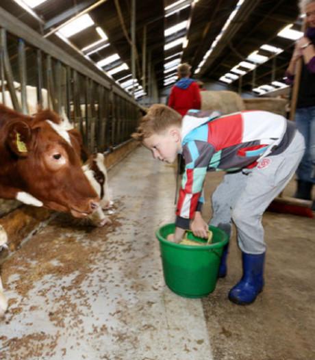 Meelopen met boer tijdens zevende editie van Boer Zoekt Hulp: 'Leukste als er een kalfje wordt geboren'