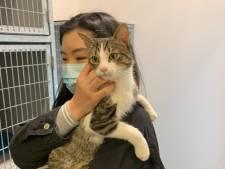 Kat die vorige week bijna verdronk in Haagse gracht is weer veilig bij zijn baasje: 'Hij heet Oreo'