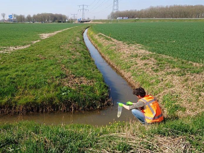 Medewerker van Arcadis zoekt in het buitengebied van Made naar DNA van de grote modderkruiper in sloten langs het toekomstige tracé van de 380 kV-hoogspanningsleiding.