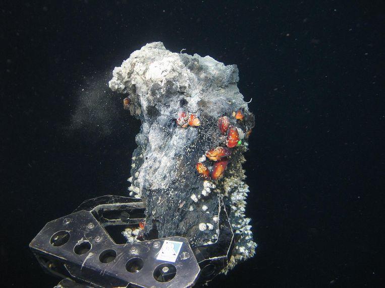 Een robotarm neemt in de diepzee een monster, op zoek naar kostbare metalen. Beeld null