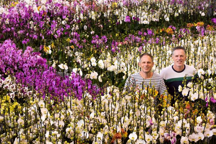 Broers Richard (links) en Eduard ter Laak tussen de orchideeën.