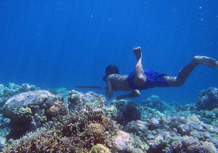 Een Bajau-visser in actie. De Bajau duiken al vele eeuwen, slechts gewapend met een houten duikbril en een speer, naar octopus, vis en zeekomkommer. Beeld AFP