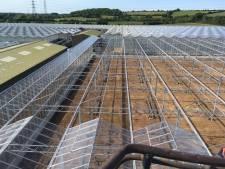 Westlandse kassenbouwers barsten van het werk in Engeland