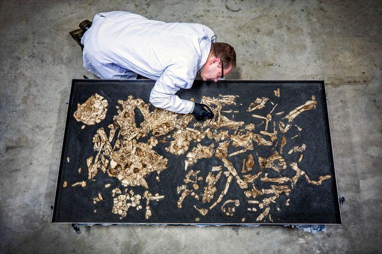 Maarssen- Neolitisch Familegraf bij Archeocare in Maarssen. Beeld raymond rutting