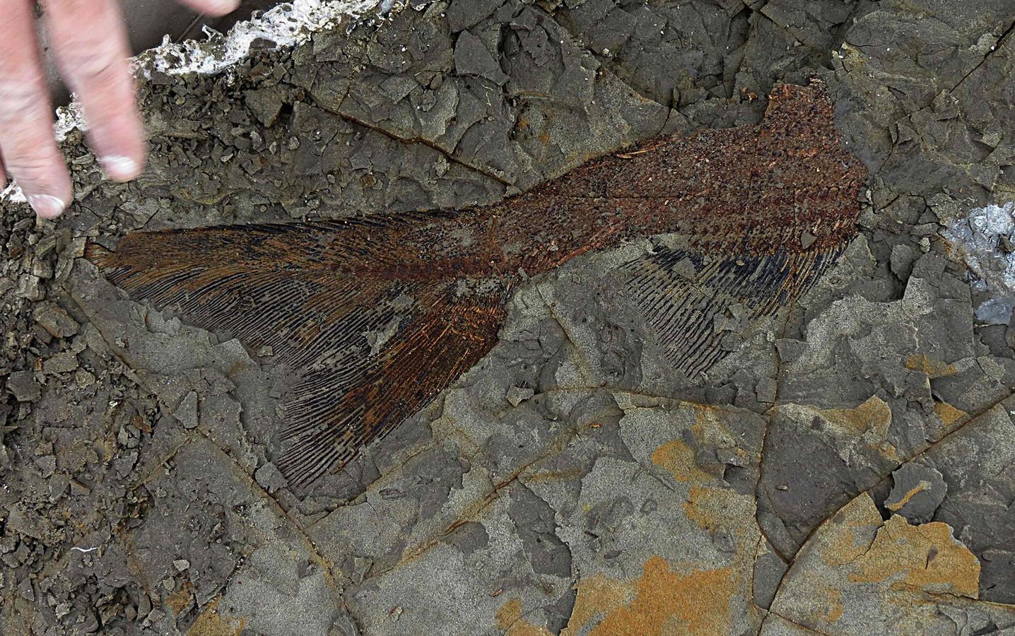 Onderzoekers vonden onder meer fossielen van vissen die op de dag van de meteorieteninslag het lieven lieten.