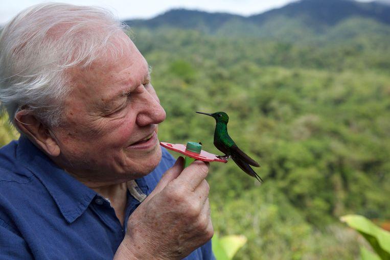 Sir David Attenborough staat in het collectieve geheugen gegrift als dé narrator van natuurdocumentaires.  Beeld BBC/Humble Bee Films/SeaLight Pictures/Gavin Thurston