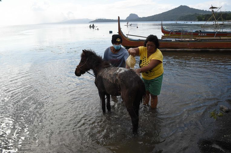 Mensen die zijn getroffen door as na de uitbarsting van de nabijgelegen vulkaan wassen hun dieren schoon.  Beeld AFP