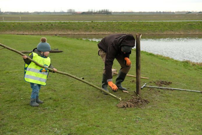Opa en kleinzoon helpen ook met het planten van bomen en struiken langs de Randweg in Strijen.