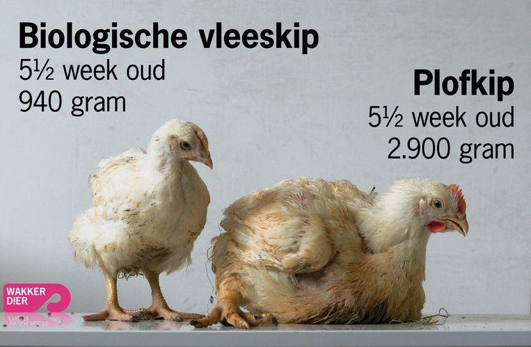 Campagnebeeld Stichting Wakker Dier. Beeld Stichting Wakker Dier