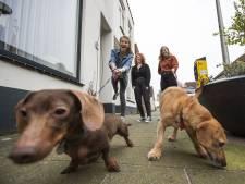 Twee honden in huis? In deze gemeenten tik je honderden euro's af (en in Rotterdam niks)