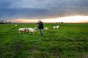 De polder Rijnenburg is nu nog een oase van rust.