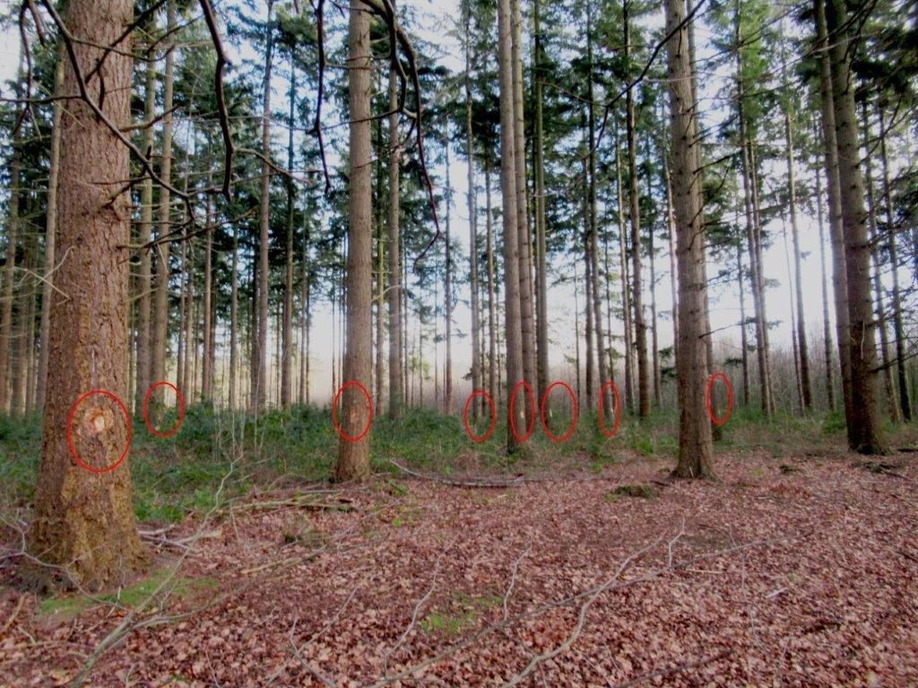 De bomen die gekapt moeten worden, zijn al gemarkeerd.