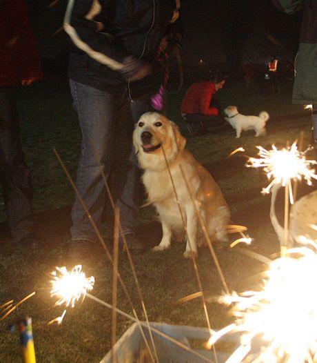 Hondenbescherming overstelpt met vuurwerkklachten