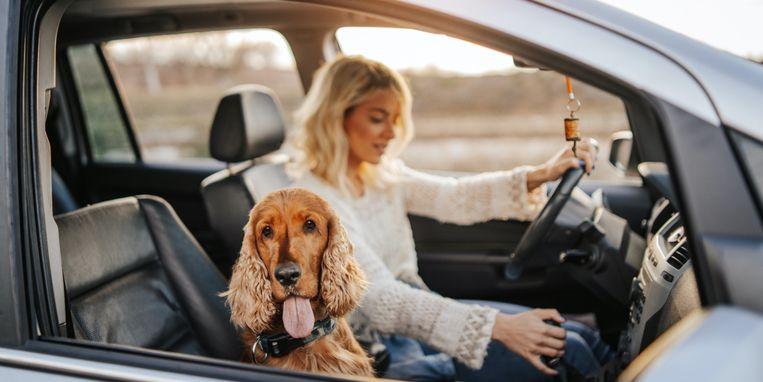 hond-auto-vakantie.jpg