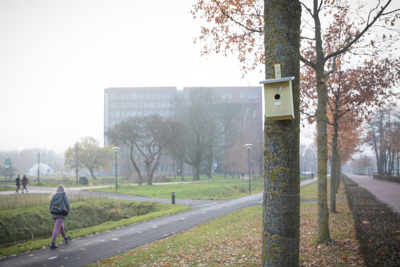 Een van de honderd nieuwe nestkastjes voor kool- en pimpelmezen op de Wageningen Campus.
