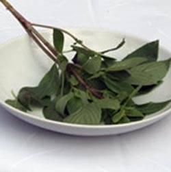 Basilic thaï (source thaisquare.be).