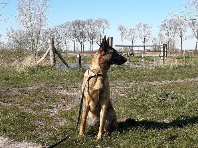 De politie van Maldegem zal strenger toezien of honden aan de leiband worden gehouden