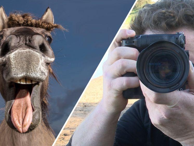 Video van de Dag | Hihihihihihi. De lach van dit paard staat in de finale