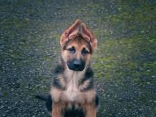 Geldstraf na verwaarlozen pup: 'Het was voor mij moeilijk om de juiste voeding in te schatten'