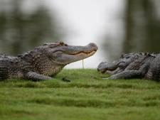Hermès va créer la plus grande ferme de crocodiles d'Australie