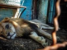 L'horreur dans un zoo albanais