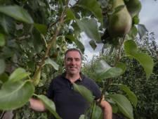 Buren tekenen voor 'Polenhotel' bij fruitteler in Dronten: 'Bedrijven hebben zelf een verantwoordelijkheid'