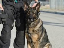 Boxtelaar (74) krijgt 30 uur taakstraf voor mishandelen politiehond: 'Ik wilde geen boete voor het blaffen'