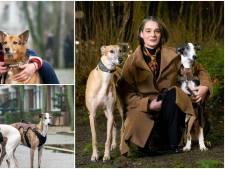 Arnhemse vrouwen ontfermen zich over Spaanse afdankertjes: 'Mijn honden zijn superhelden'