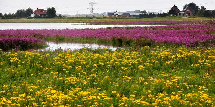 De Noordwaard in de Biesbosch in bloei. Dordrecht zoekt een Klimaatburgemeester, die anderen kan inspireren zich in te zetten voor een beter klimaat.